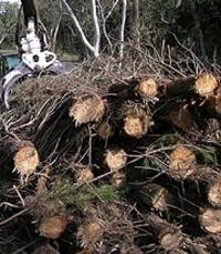Cisro_forest_waste