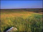 A_prairie